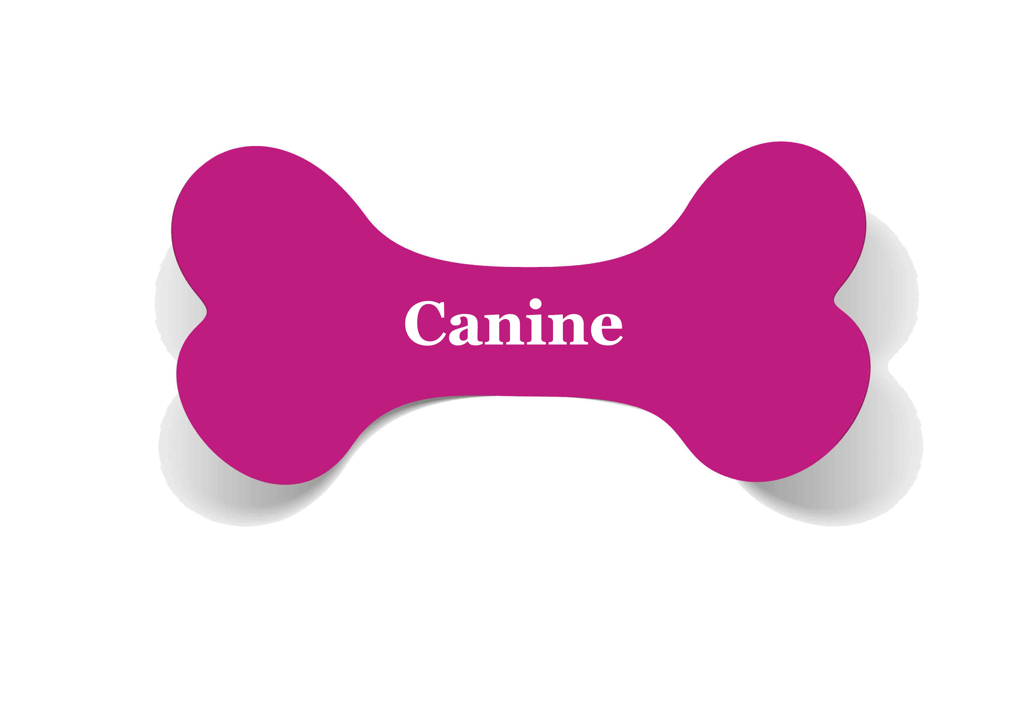 Canine
